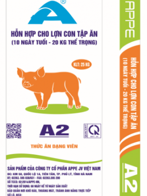 A2 HH cho lợn con tập ăn